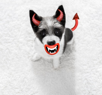 Zero hours contract: A dog that has devil ears, a devilish mouth, and a devil's tail