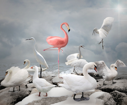 Rethinking your organisational values: Flamingo stood amongst some white birds