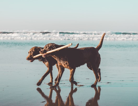 Dogs running on shore
